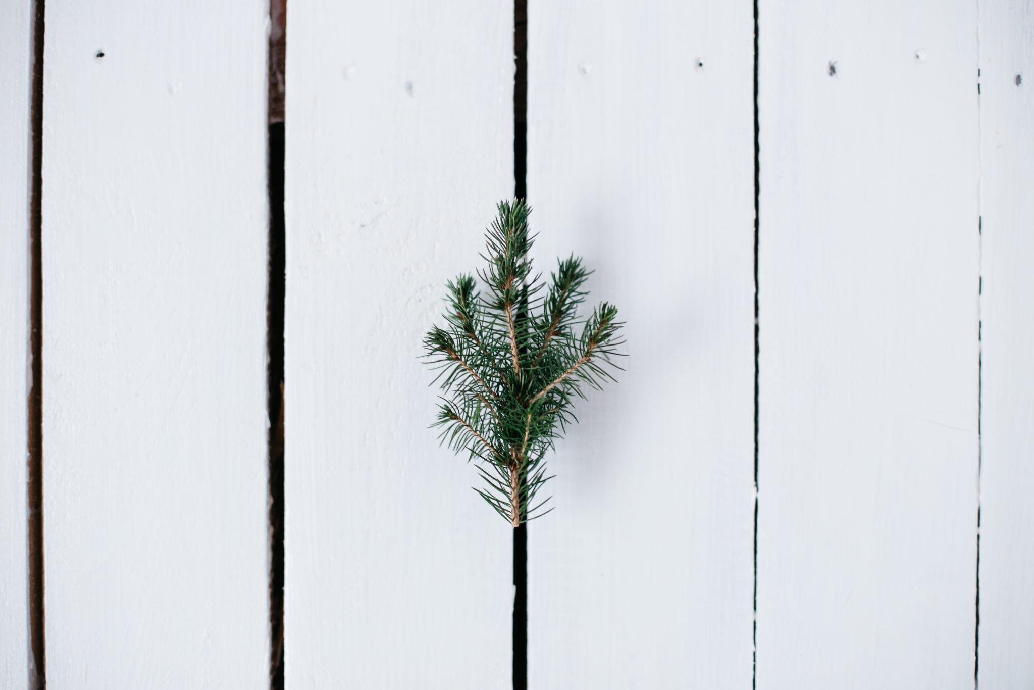 Šogad aicinām svinēt Zaļos Ziemassvētkus